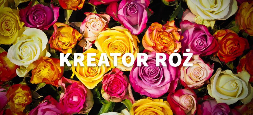 kreator-roz